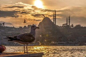 Babu House Guided Tours Istanbul